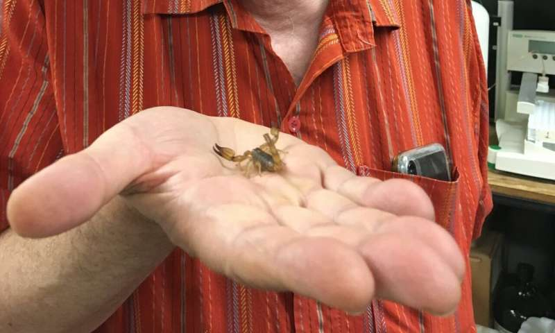 Stanford researchers synthesize healing compounds in scorpion venom