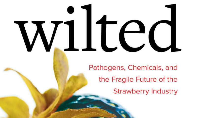 Strawberries: The tasty fruit with a tainted environmental legacy and an uncertain future