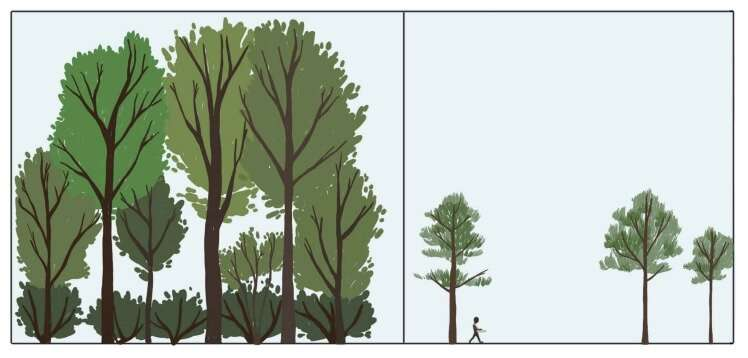 Structurally complex forests better at carbon sequestration
