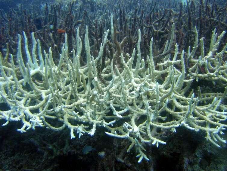 Suffering in the heat—the rise in marine heatwaves is harming ocean species