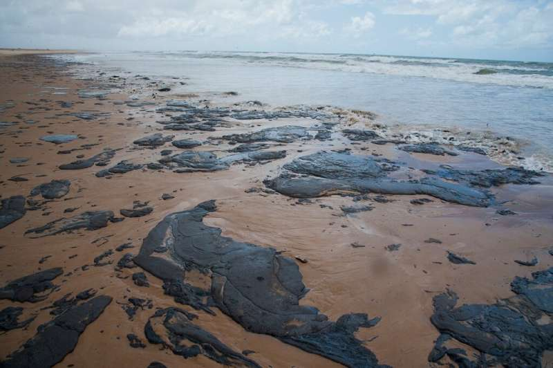 "Tamar, a group dedicated to the protection of sea turtles, said the oil spills staining Brazilian beaches was ""the worst en"