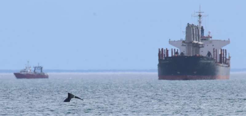 Thames Humpback whale killed by ship – the casualty of a global problem