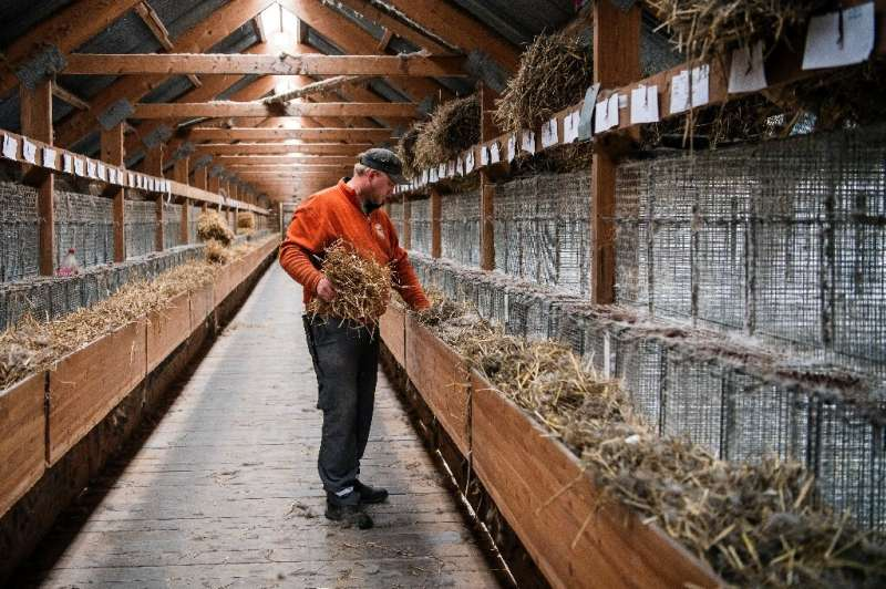 """The Norwegian fur farmers' association says the ban is """"unjustified, illegal and undemocratic"""""""
