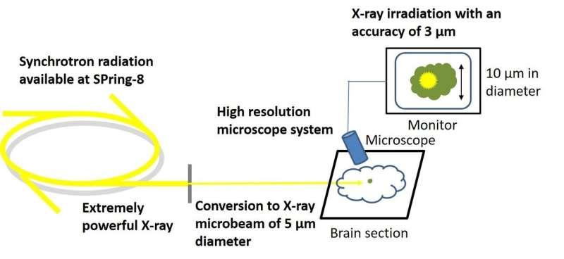 The seeds of Parkinson's disease: Amyloid fibrils that move through the brain