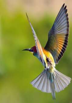 Tracking technology gives new insights into the behaviour of migrating birds