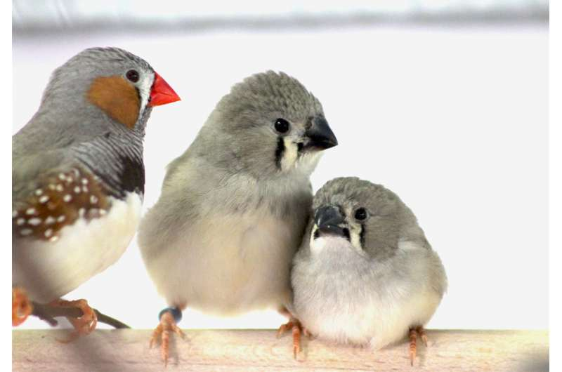 Traffic noise affects normal stress reactions in zebra finches and delays offspring growth