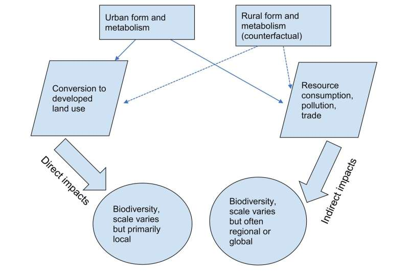 Urban growth causes more biodiversity loss outside of cities