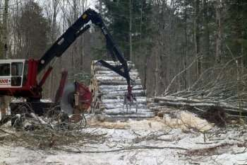 Whole-tree harvesting could boost biomass production