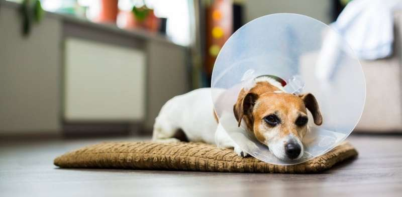 Your personality determines how you experience pain – and it's the same with your pet