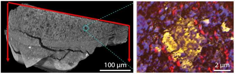 Scientists explore aged paint in microscopic detail to inform preservation efforts