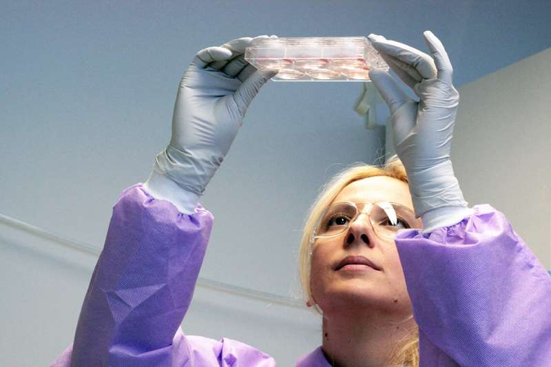 Study reveals large molecular differences between stem cells grown on different biomaterials