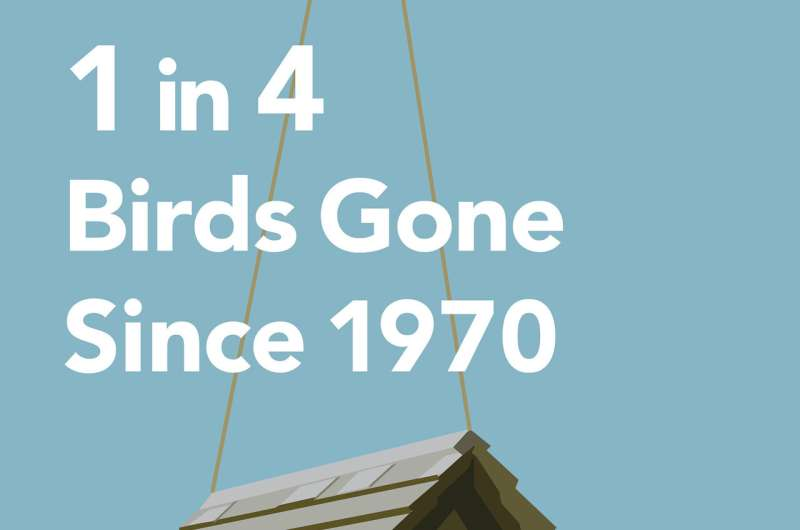 New study finds US and Canada have lost more than 1 in 4 birds in the past 50 years