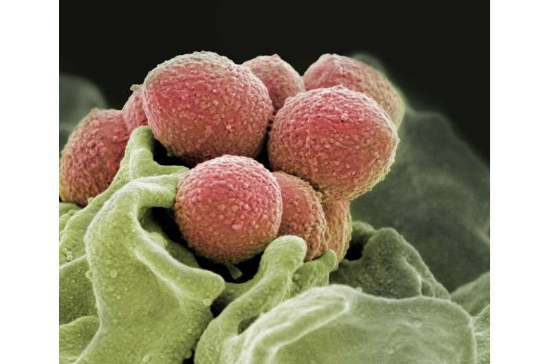 Researchers find trigger that turns strep infections into flesh-eating disease