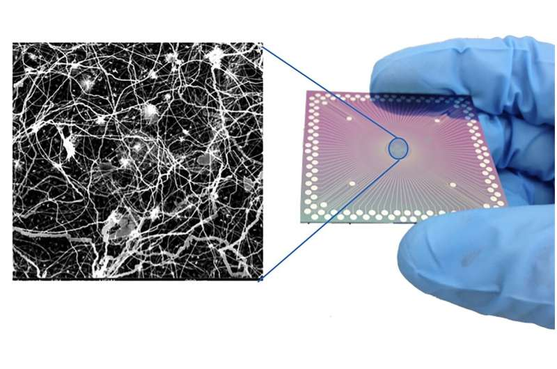 Researchers observe brain-like behavior in nanoscale device