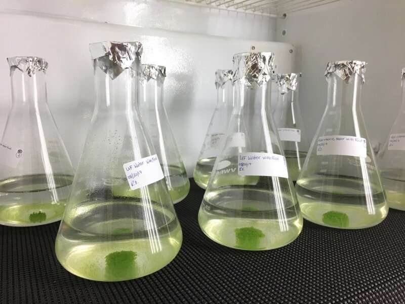 Researchers remove harmful hormones from Las Vegas wastewater using green algae