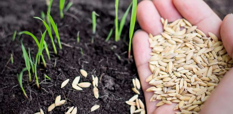 Climate change is hurting farmers – even seeds are under threat