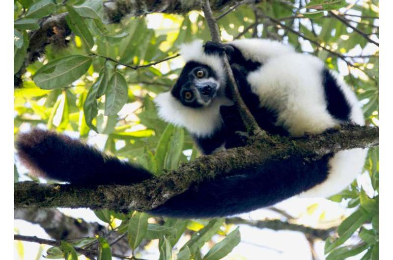 Climate change not the only threat to vulnerable species, habitat matters