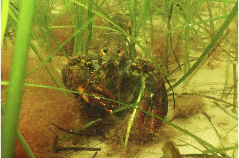 Scientists struggle to save seagrass from coastal pollution