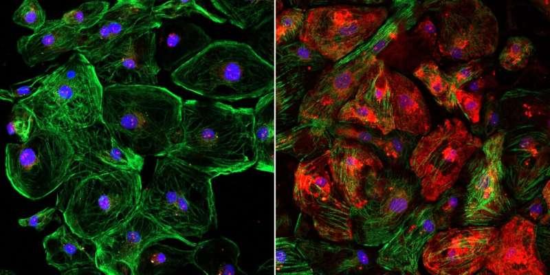 Scientists find method to boost CRISPR efficiency