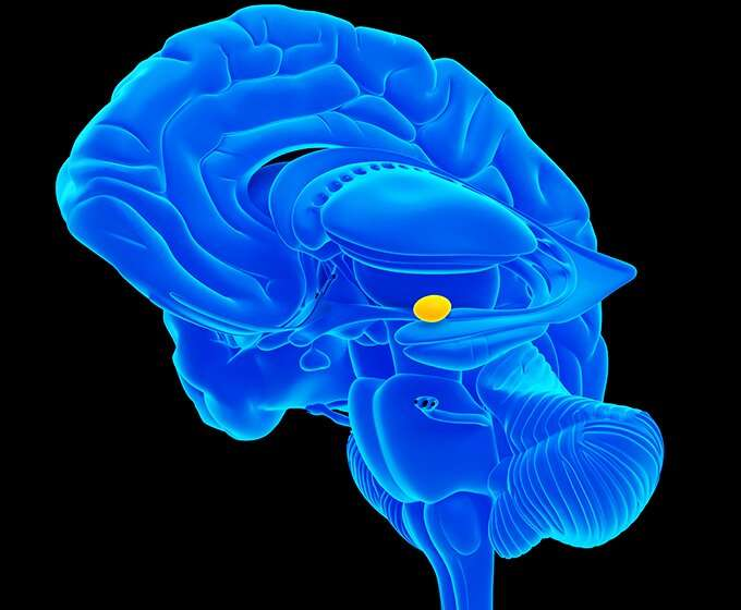 Researchers discover new pathways in brain's amygdala