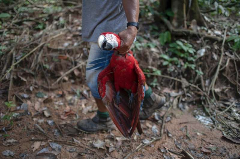 Arara indigenous chief Motjibi, 43, holds a red macaw he killed while patrolling tribal lands—hunting is a traditional pursuit f