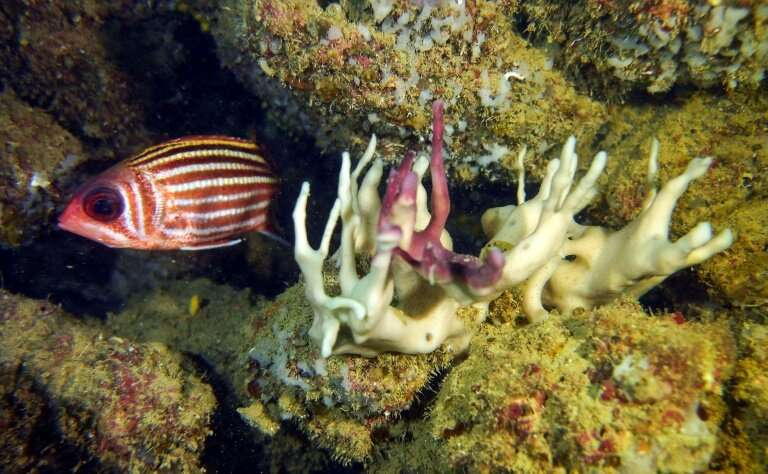 Coral bleaching occurs when abnormal environmental conditions, such as warmer sea temperatures, cause corals to expel tiny photo
