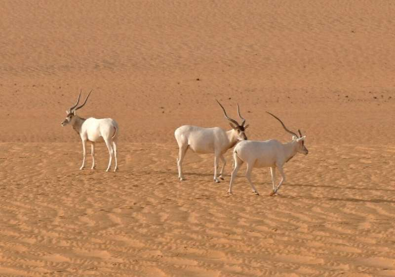 Critically endangered species such as the addax or white antilope could disappear if major changes are made to the Niger nationa