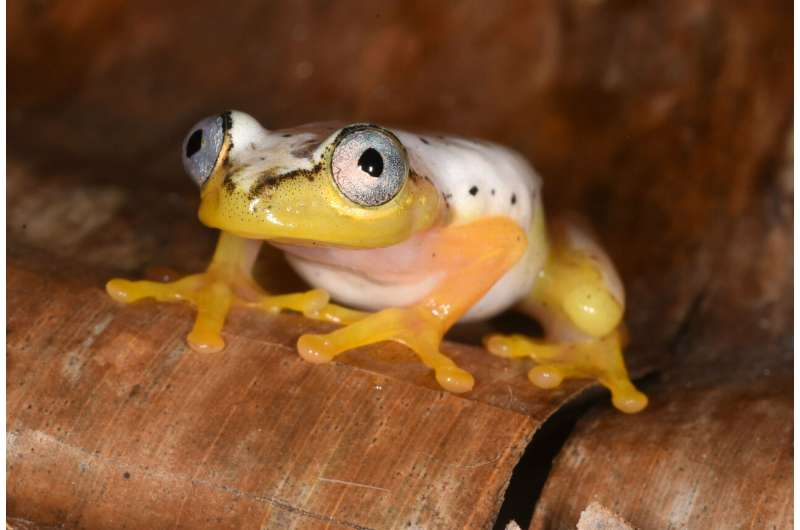 Dermal disruption: Amphibian skin bacteria is more diverse in cold, variable environments