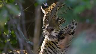 Do nature documentaries make a difference?