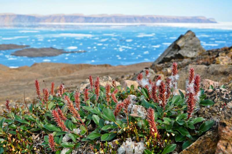 Early melting of winter snowfall advances the Arctic springtime