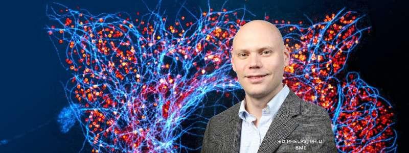 Engineering research deepens understanding of glucose-insulin interaction