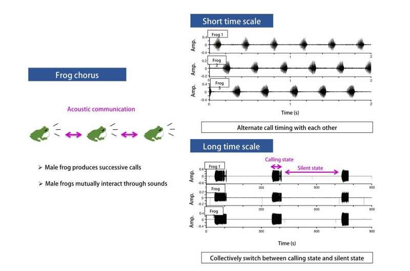 Frog choruses inspire wireless sensor networks