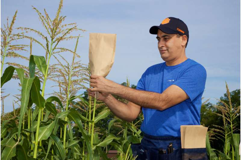 Genetic breakthrough in cereal crops could help improve yields worldwide
