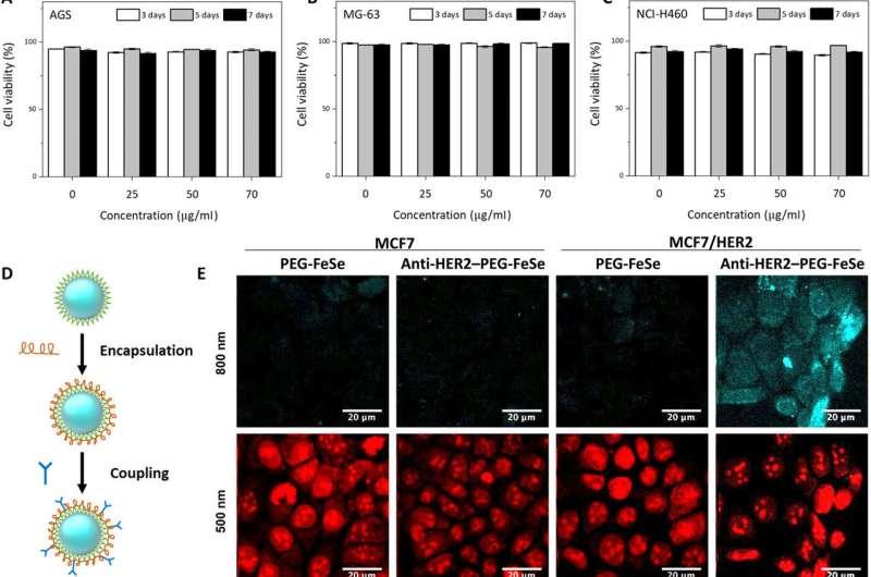 Iron Selenide (FeSe) quantum dots for in vivo multiphoton biomedical imaging