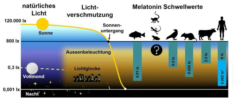 Light pollution can suppress melatonin production in humans and animals