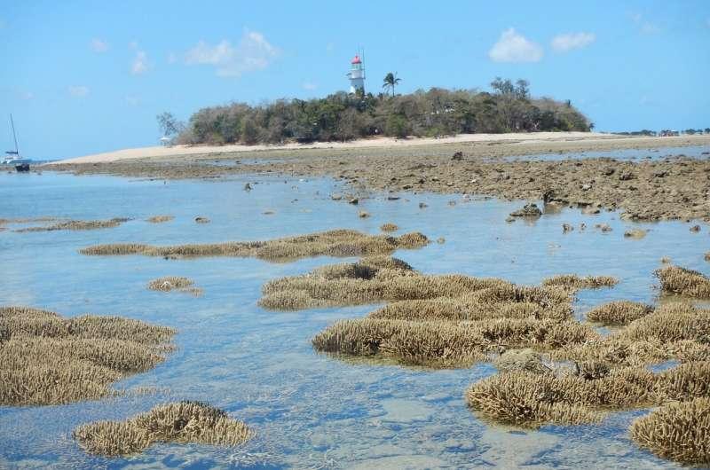 Longest coral reef survey to date reveals major changes in Australia's Great Barrier Reef