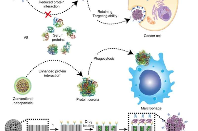 Nanoparticle breakthrough in the fight against cancer