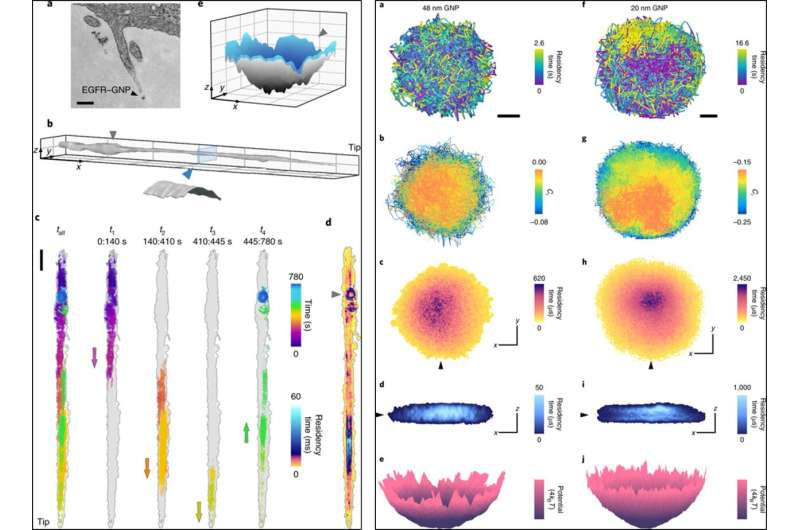 Nanoscopic protein motion on a live cell membrane