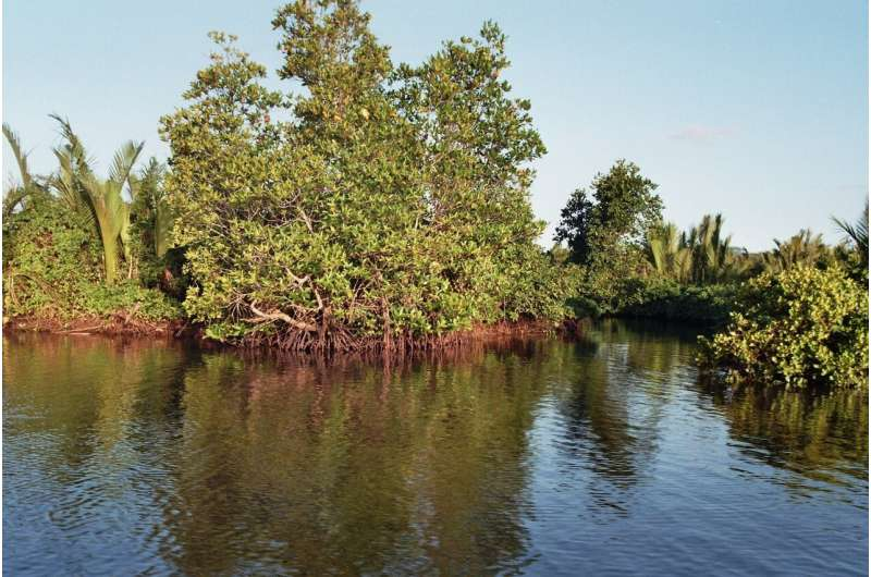 Natural ecosystems protect against climate change