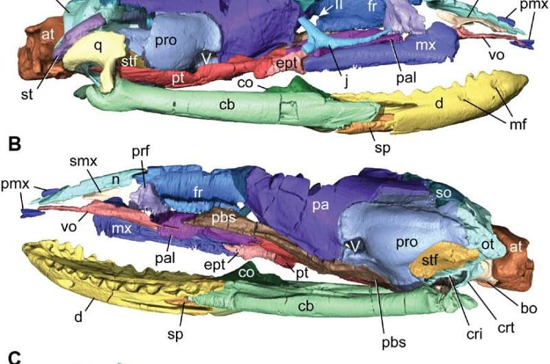 New fossils shed light on how snakes got their bite and lost their legs