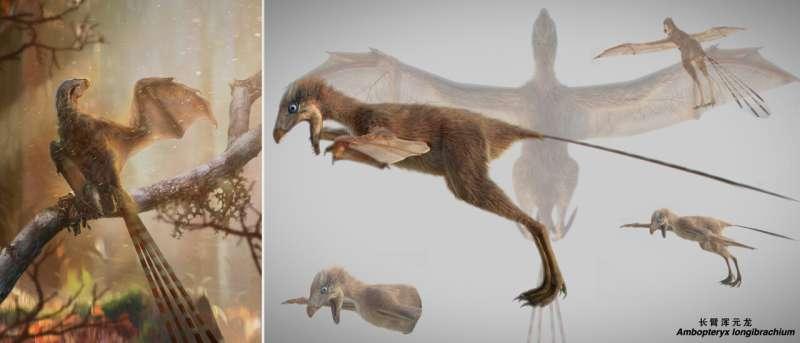 New Jurassic non-avian theropod dinosaur sheds light on origin of flight in Dinosauria