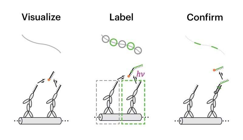 **Painting the molecular canvas in super-resolution