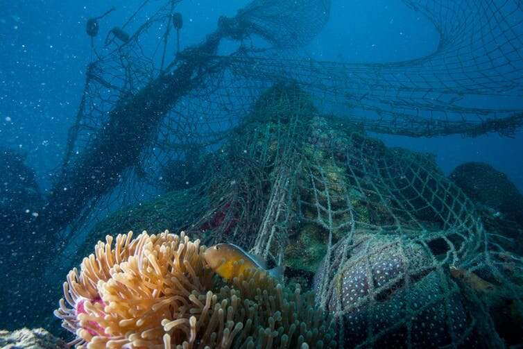 Plastic poisons ocean bacteria propping up the marine food chain