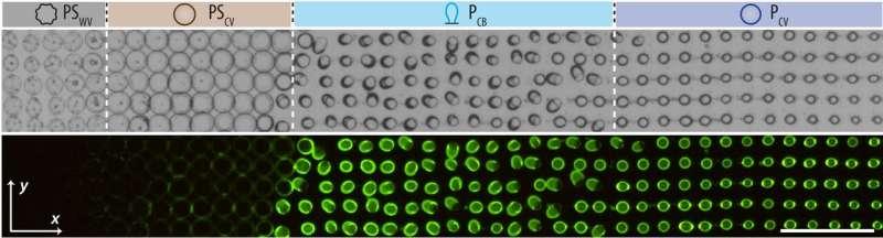 Shape shifting protocells hint at the mechanics of early life