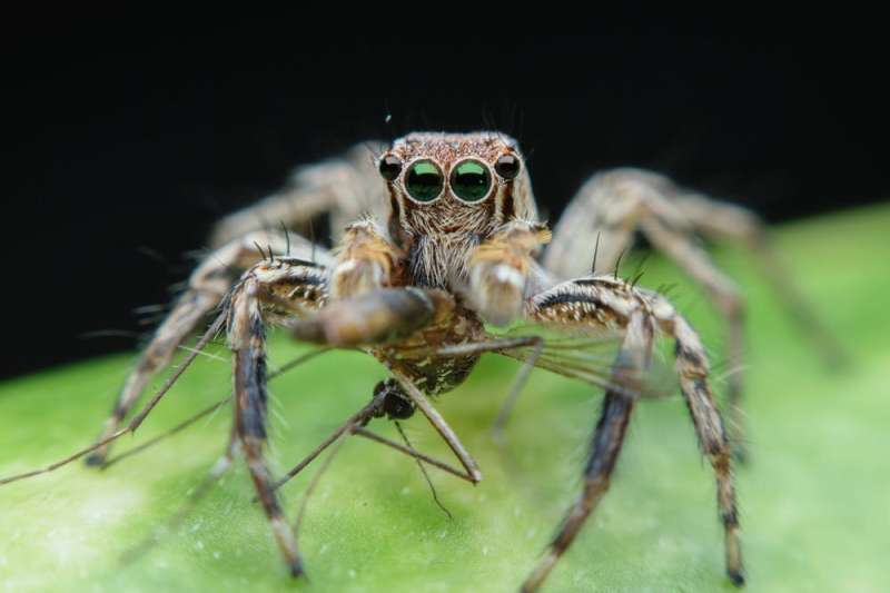 Spiders are threatened by climate change – and even the biggest arachnophobes should be worried