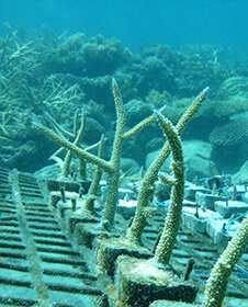 Study proves importance of bird poo in enhancing coral growth