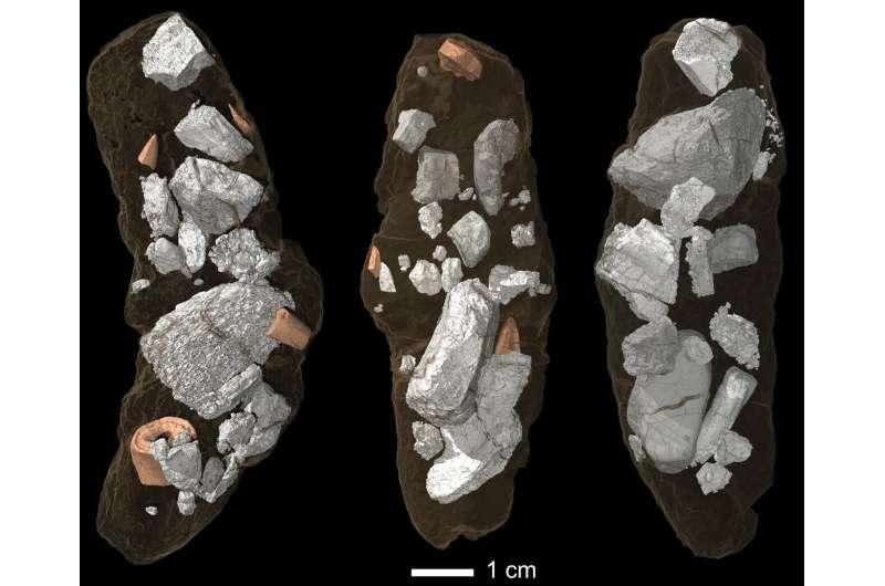 The 210-million-year-old Smok was crushing bones like a hyena