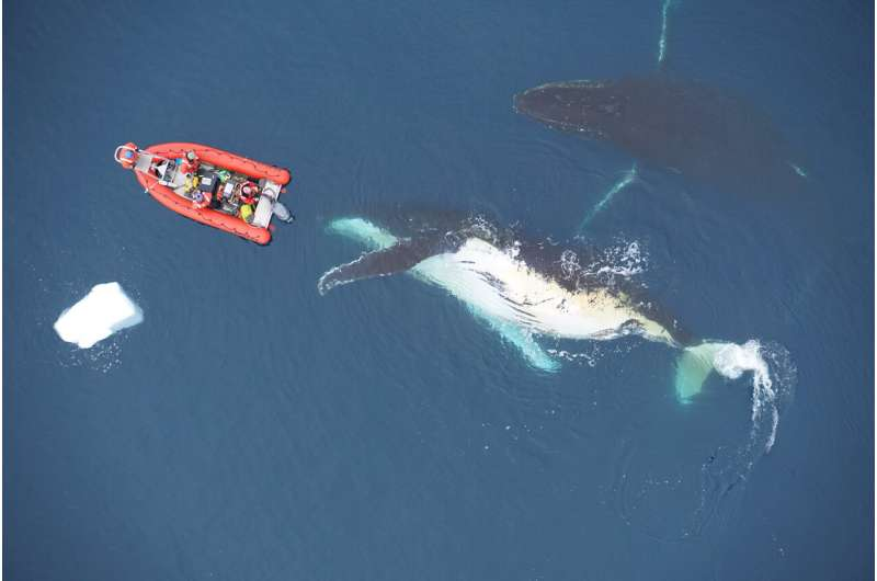 The limits of ocean heavyweights: Prey curb whales' gigantic size