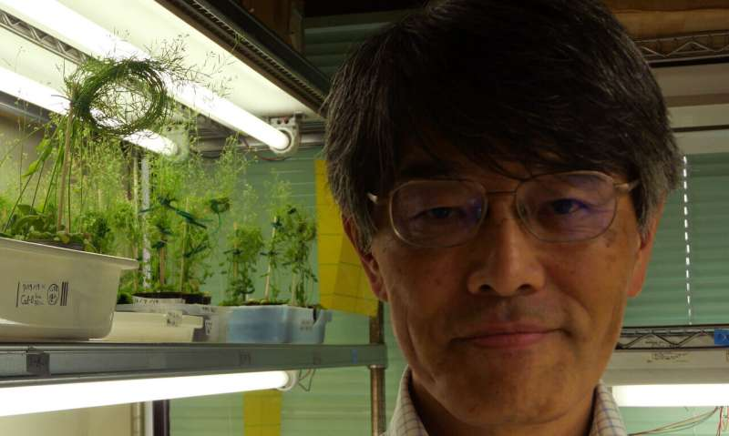 To grow or to flower: Genes IDed in early land plant descendant also found in modern crops