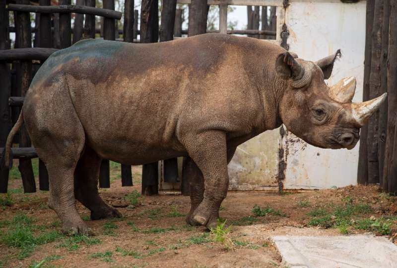 Conservation efforts have brought the black rhino population back up to around 5,000